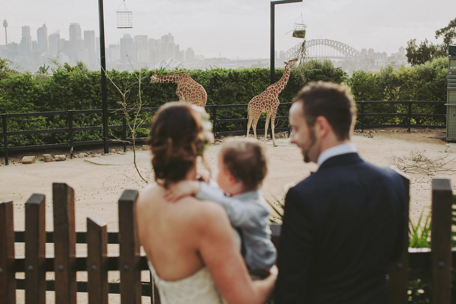Bride, groom and their son looking at the giraffes at Taronga Zoo Sydney | Andrea Calodolce Marriage Celebrant Sydney