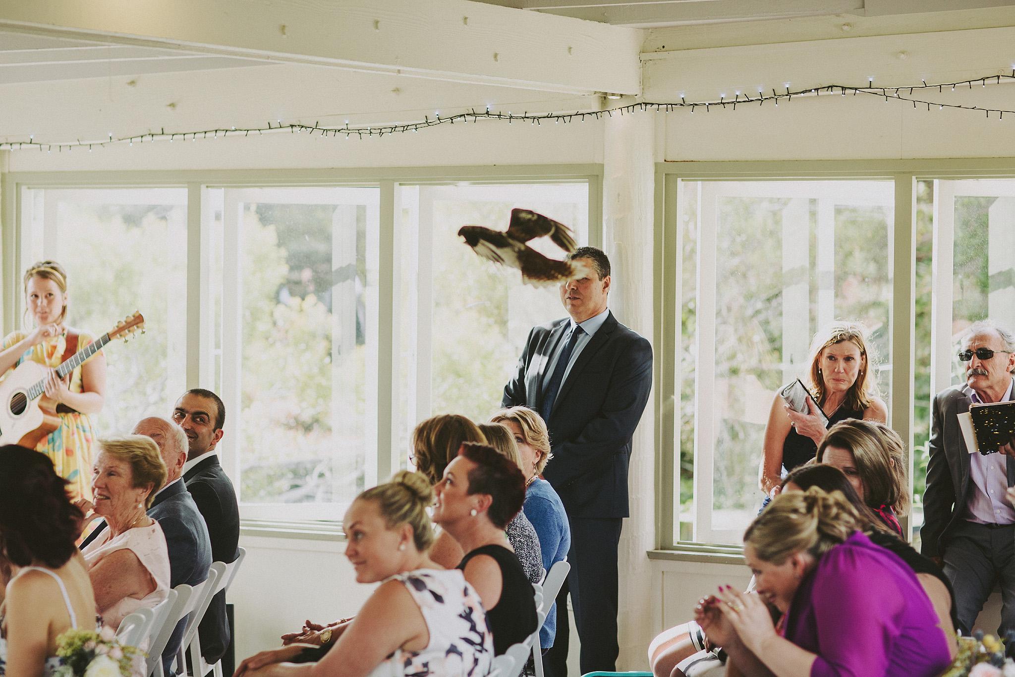 Uninvited kookaburra gatecrashes wedding at Taronga Zoo Sydney |Andrea Calodolce Marriage Celebrant Sydney