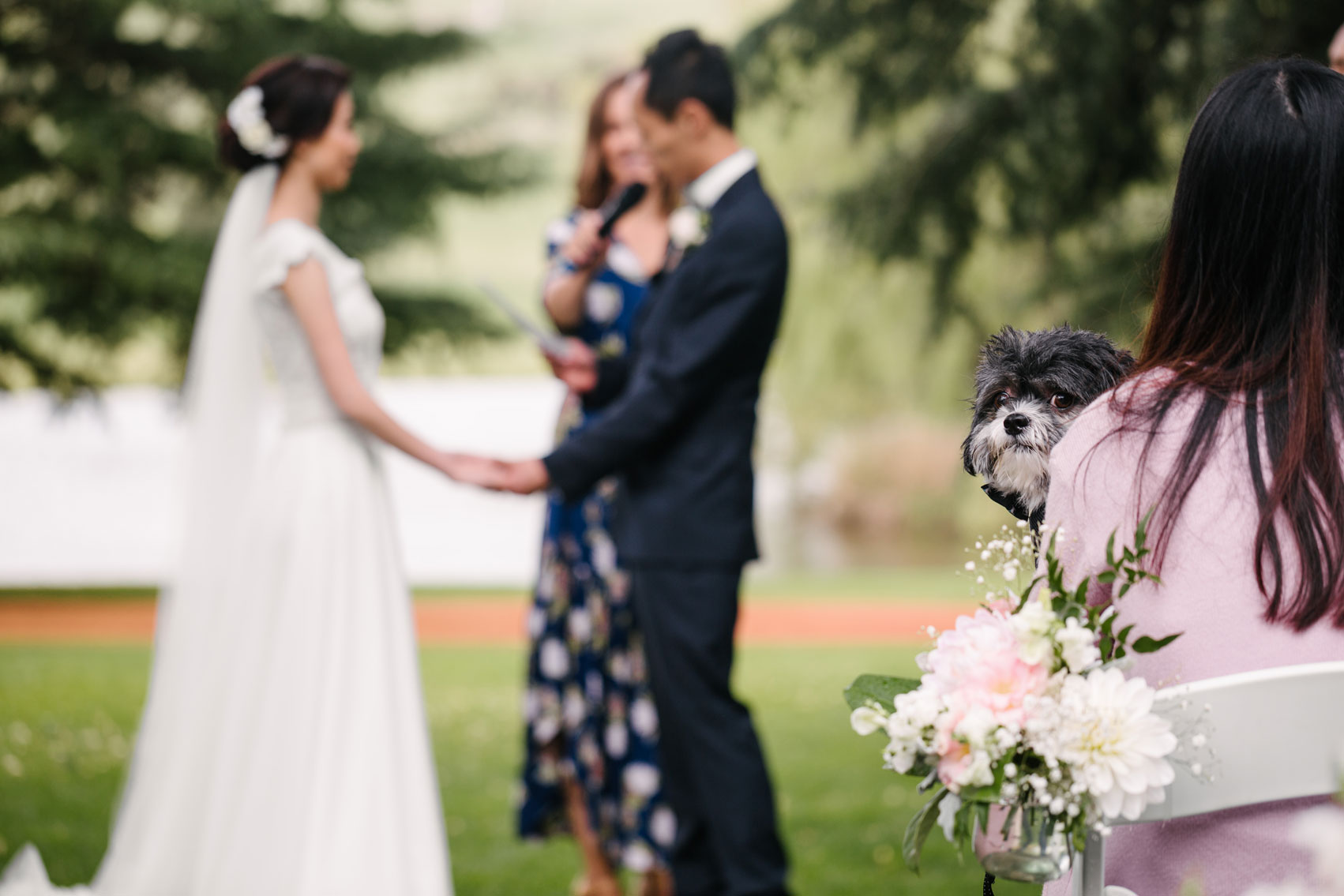 Momo the dog at his masters' wedding ceremony